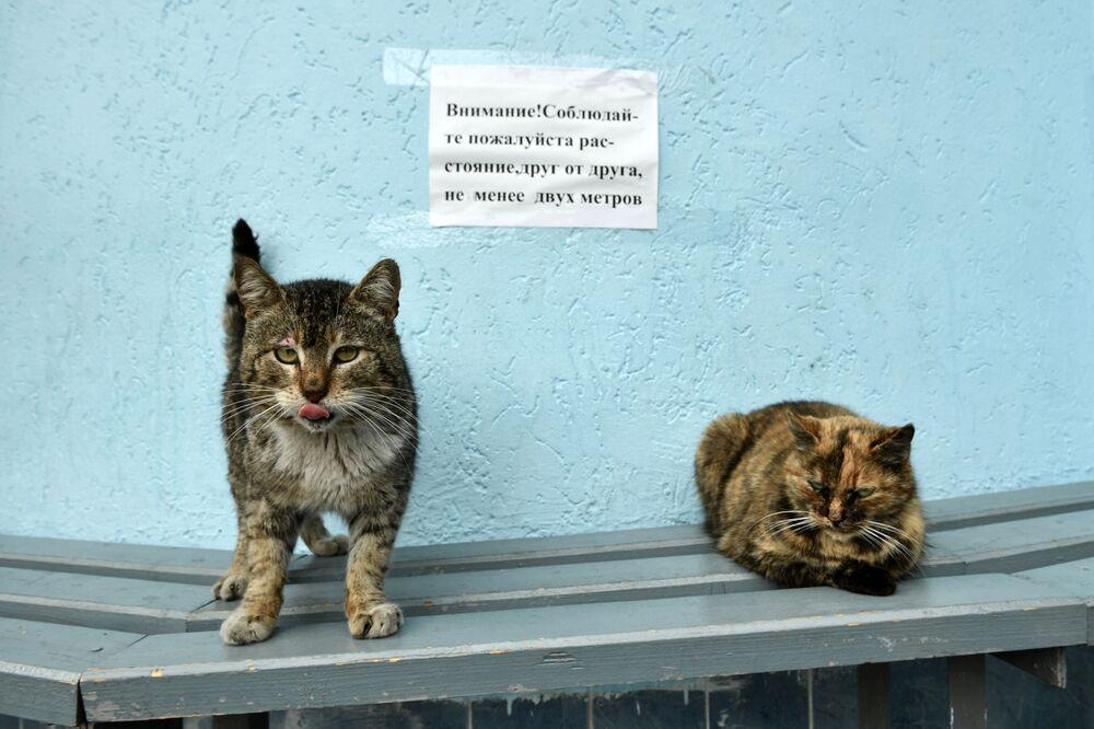 Koty na tle ogłoszenia o konieczności zachowania dystansu społecznego z powodu koronawirusa na przystanku autobusowym w Jałcie