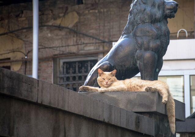 Kot wygrzewający się w słońcu na ulicy w Tbilisi