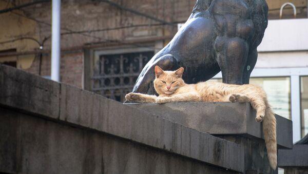 Kot wygrzewający się w słońcu na ulicy w Tbilisi - Sputnik Polska