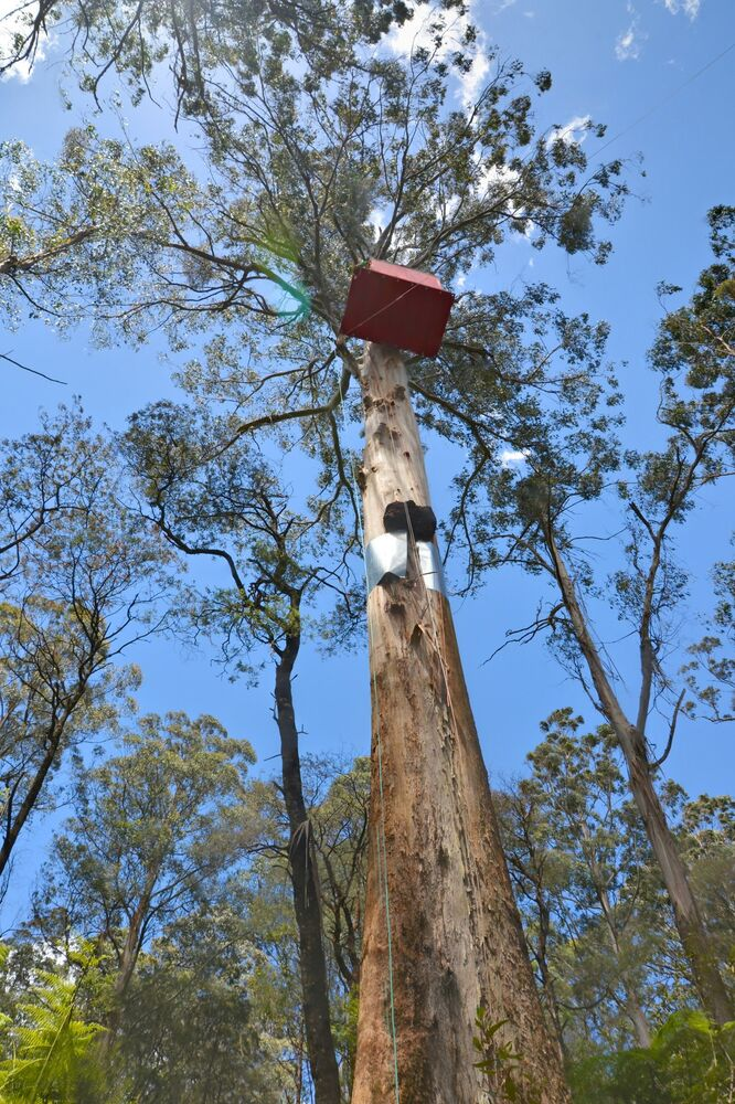 Domek na drzewie w Australii