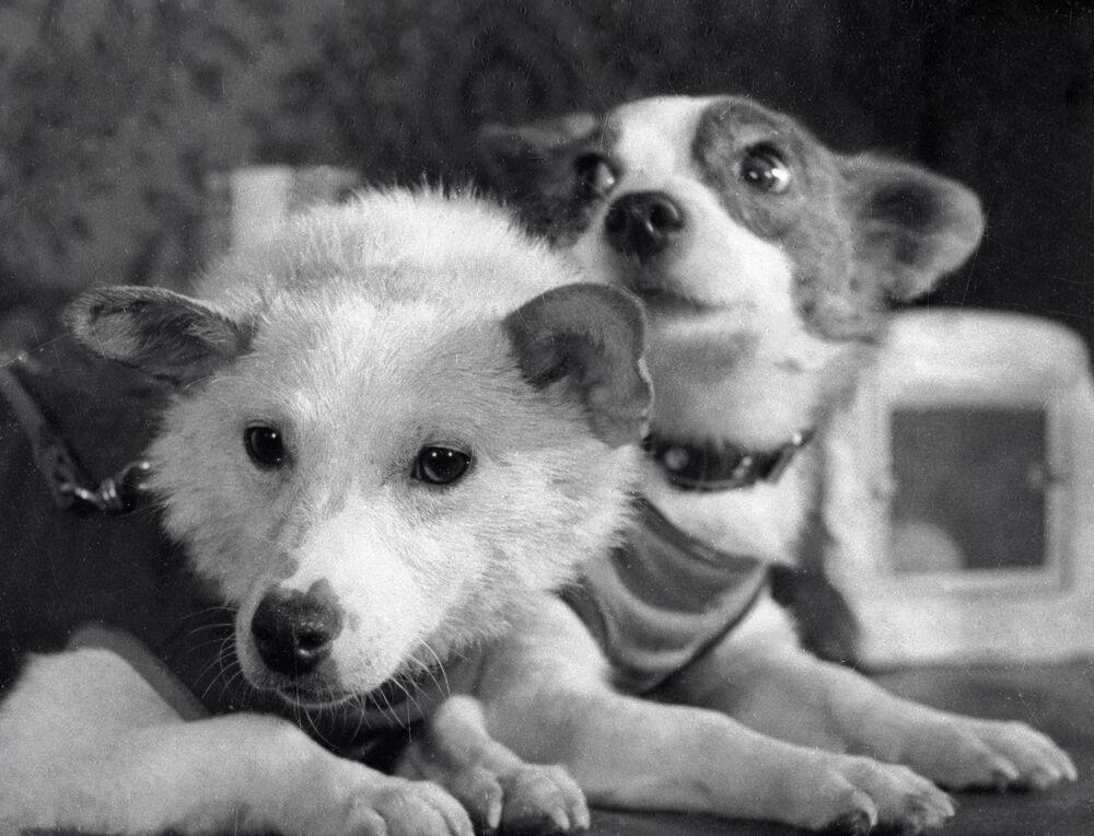 Psy astronauci Biełka i Striełka