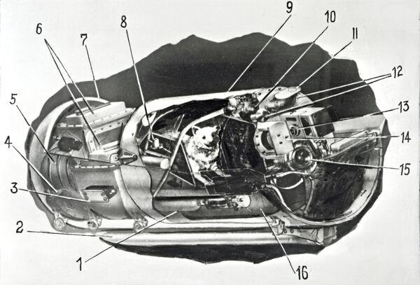 Hermetyczna kapsuła, w której znajdowały się psy - Sputnik Polska
