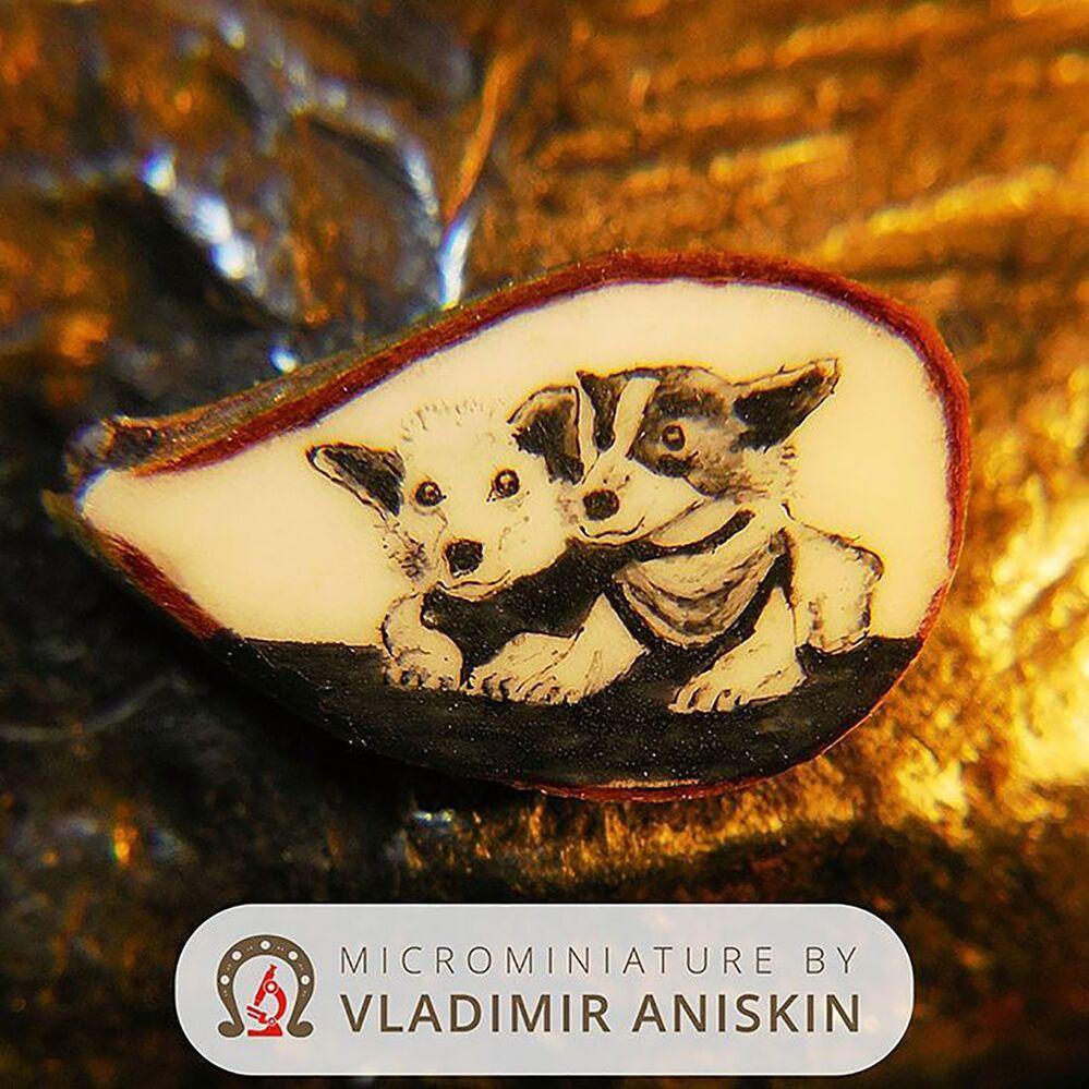 Portret Biełki i Striełki na połówce jabłkowego nasiona