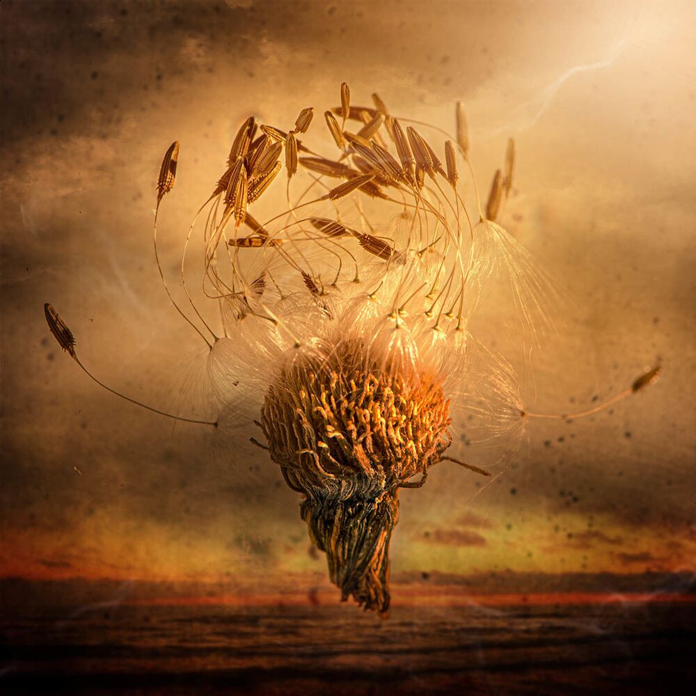 Zdjęcie Flying Wishes brytyjskiej fotograf Kristiny Zvinakeviciute, finalistki konkursu IGPOTY Macro Art 14.