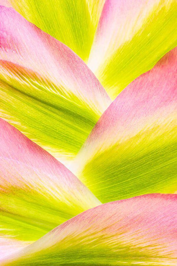 Zdjęcie Mountains of Tulip Petals brytyjskiej fotograf Anne MacIntyre. II miejsce w konkursie IGPOTY Macro Art 14 - Sputnik Polska