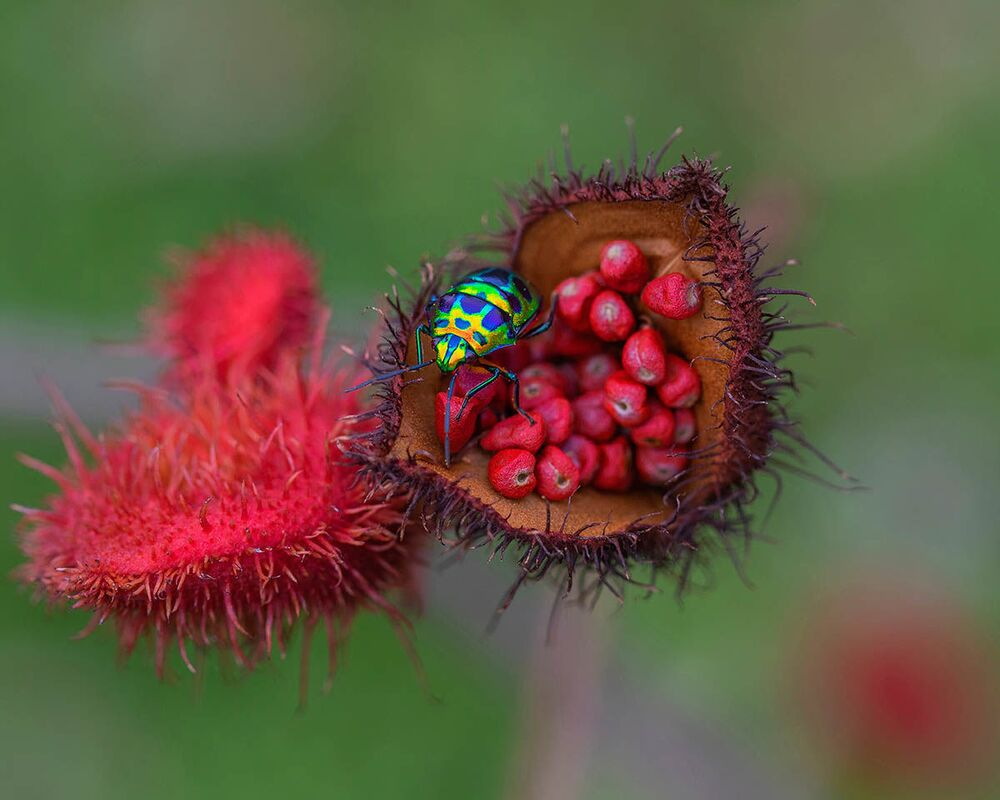 Zdjęcie Jewels tajskiego fotografa Wei Fu. Fotografia znalazła się na liście Commended konkursu IGPOTY Macro Art 14.