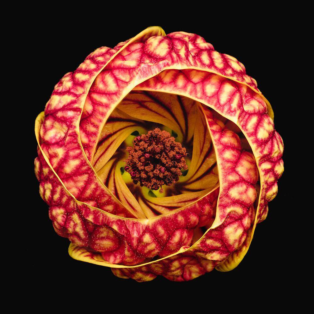 Zdjęcie Vortex Blossom brytyjskiego fotografa Bruno Militelli, finalisty konkursu IGPOTY Macro Art 14.