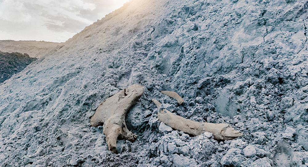 """Szczątki mamuta znalezione na złożu arktycznym """"Gazprom Neft"""" w rejonie jamalskim"""