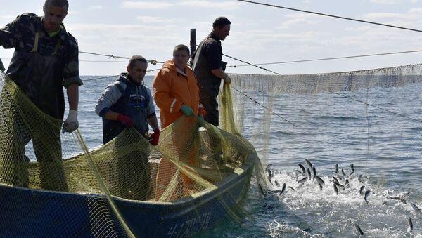 Masowe łowienie ryb - Sputnik Polska