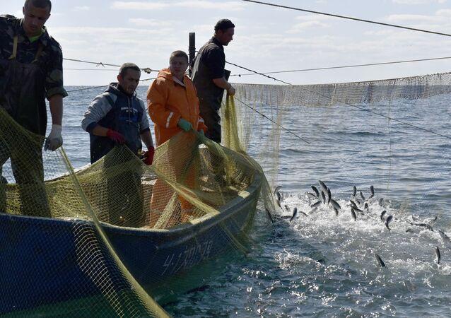 Masowe łowienie ryb