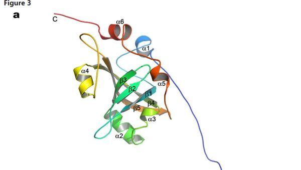 Białko Est3 telomerazy. - Sputnik Polska