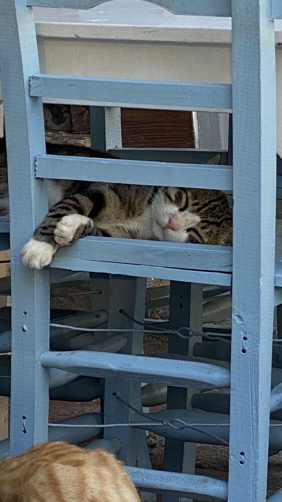 Kot na jednej z ulic Stambułu