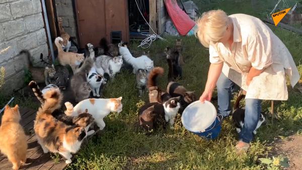 Dobra kobieta daje niepełnosprawnym zwierzętom drugą szansę - Sputnik Polska
