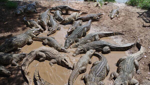 Krokodyle - Sputnik Polska