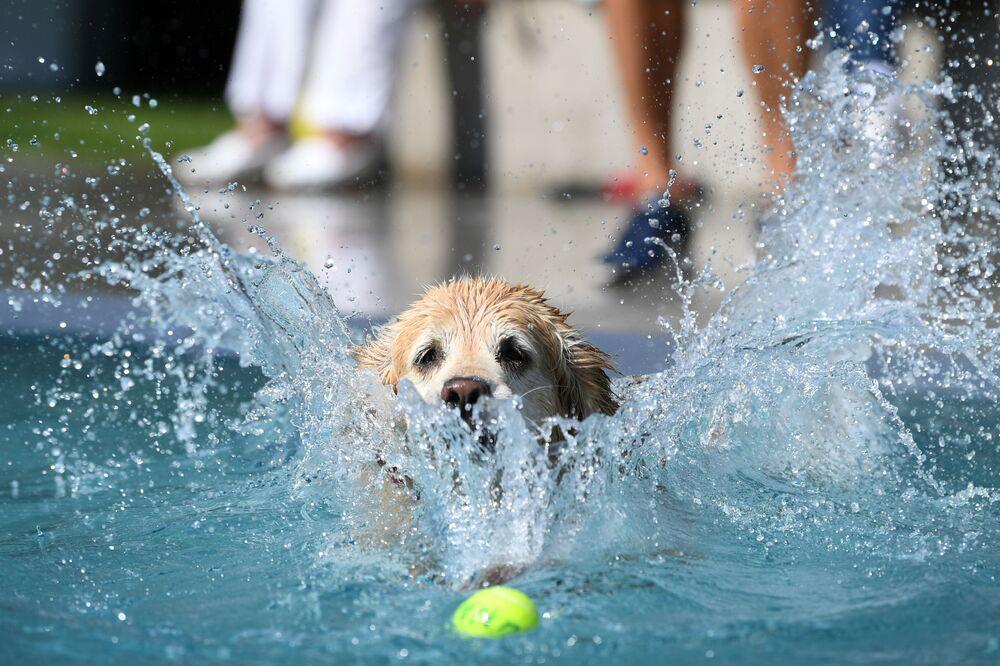 Pies w basenie