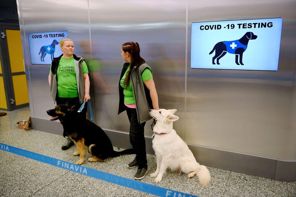 Psy z lotniska w Helsinkach, które potrafią wykryć COVID-19 u pasażerów
