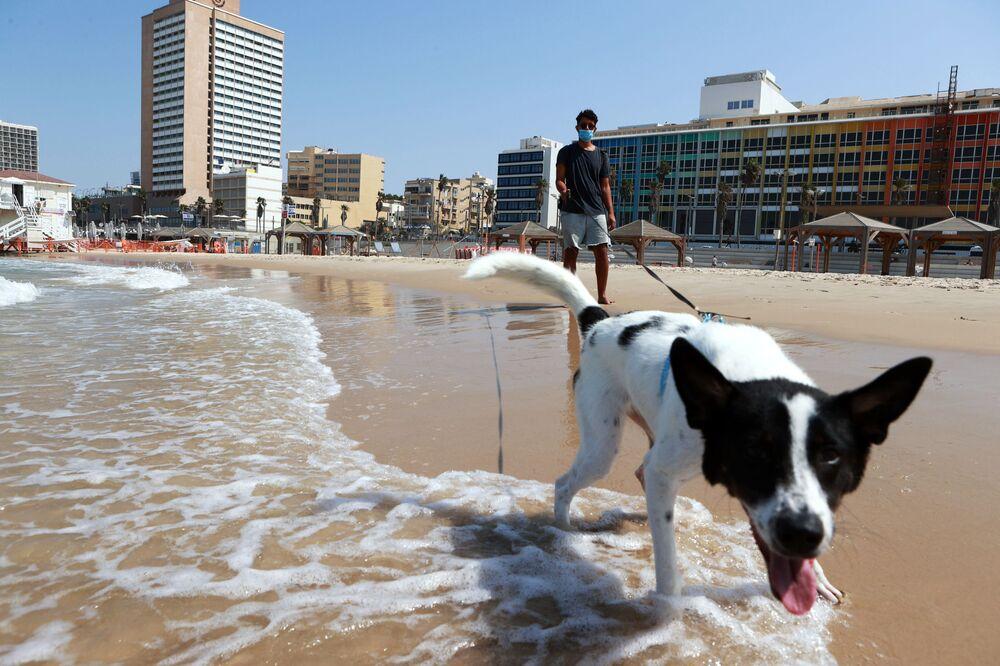 Pies na plaży w Tel Awiwie
