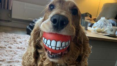 """""""Nowe zęby!"""". Autor: Lianne Richards"""
