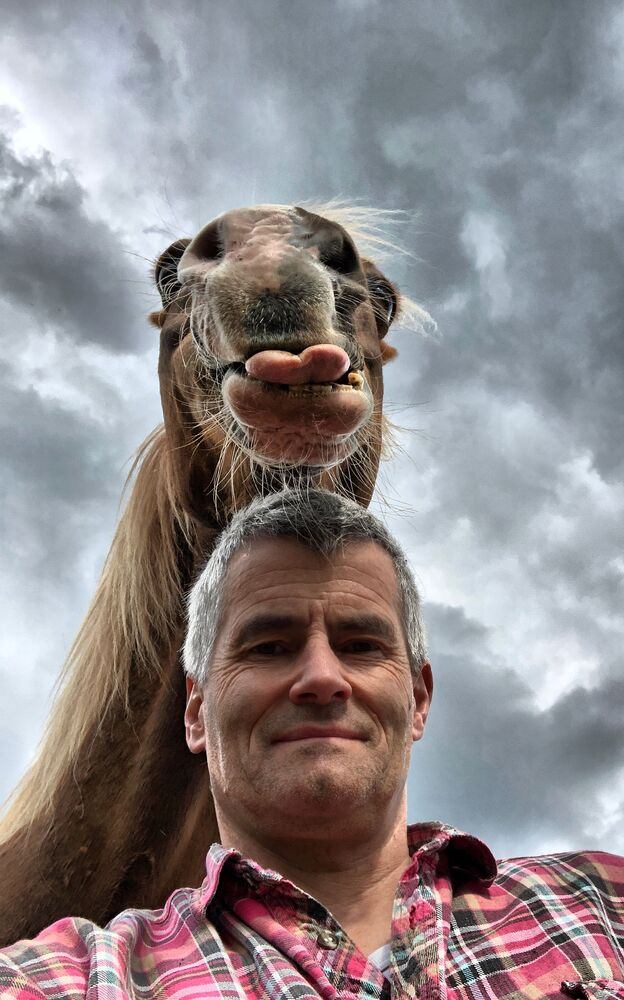 """Śmieszny koń"" Autor: Peter von Shnen"