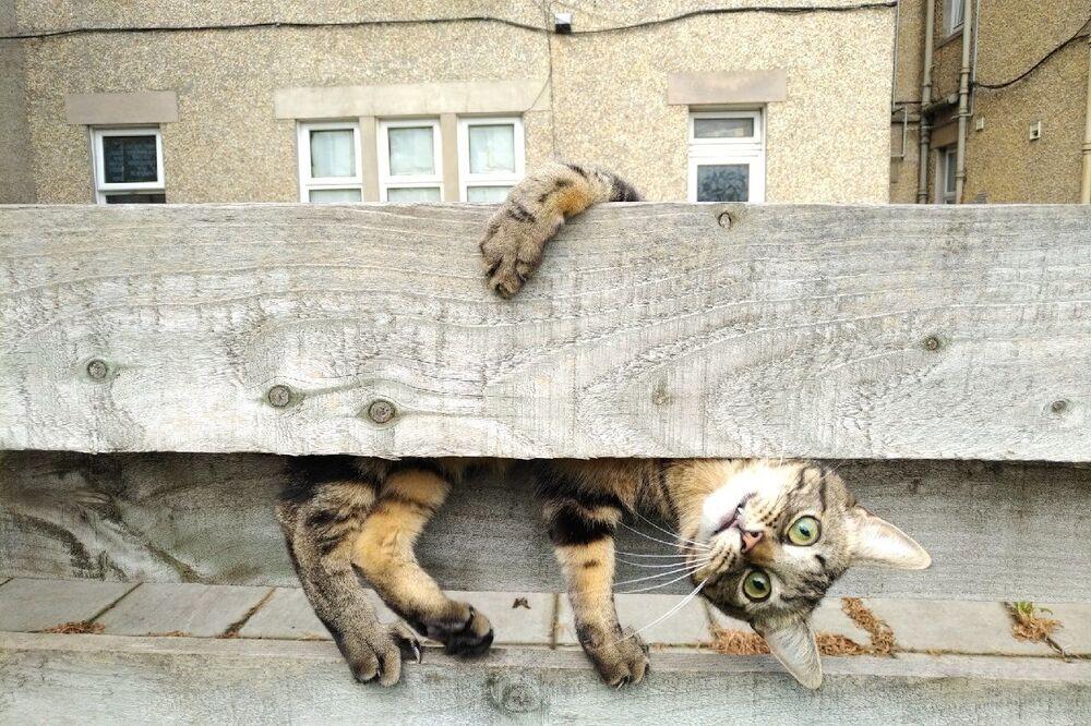 """Do góry nogami"" Autor: Malgorzata Russell"
