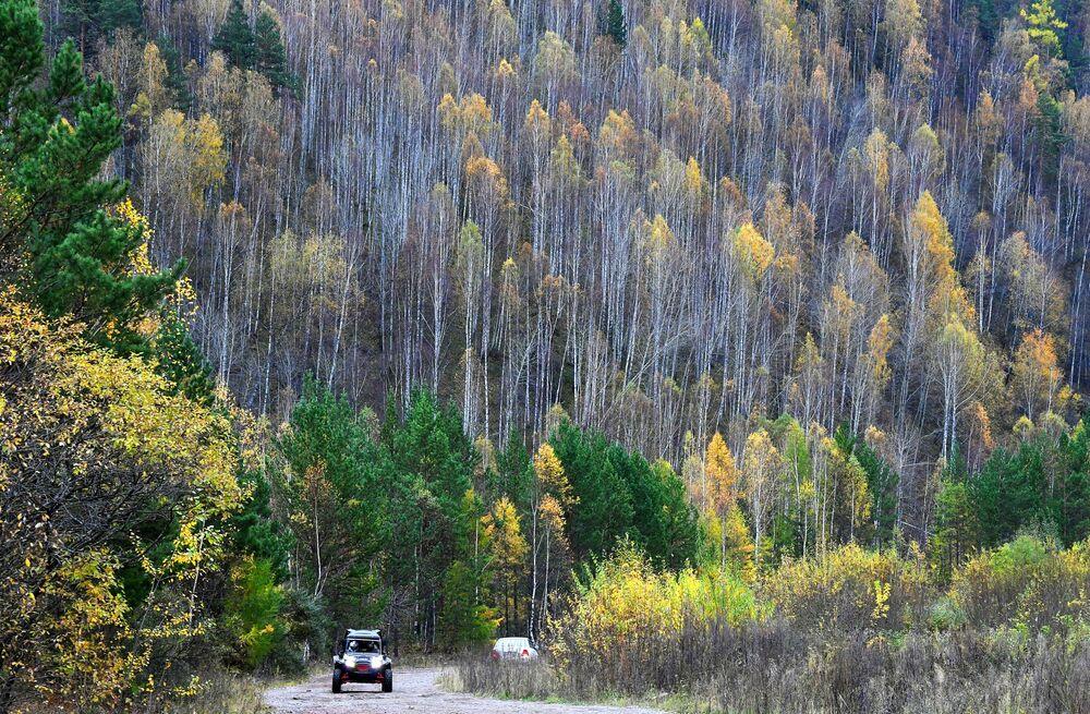 Jesienne drzewa w Kraju Krasnojarskim
