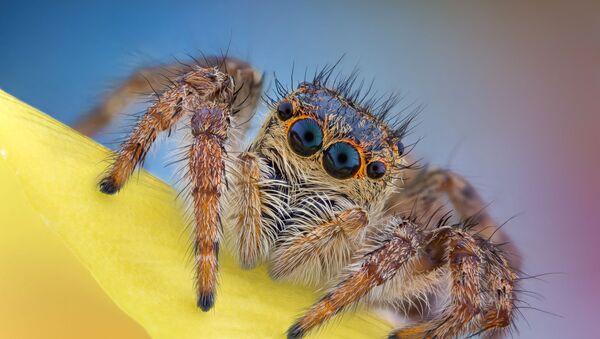 """Zdjęcie """"Jumping spider"""" fotografa Andrei Nica uczestniczącego w konkursie Nikon Small World 2020 - Sputnik Polska"""
