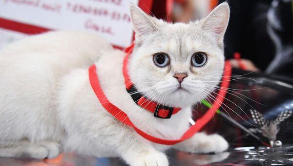 Kot na smyczy - Sputnik Polska