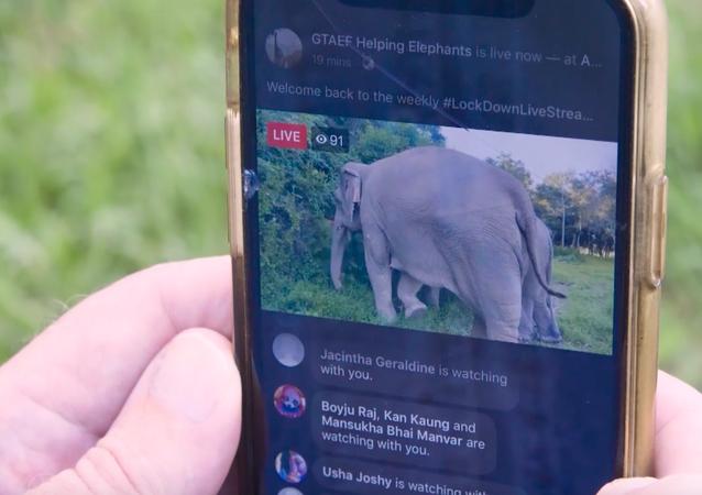 Słonie na żywo
