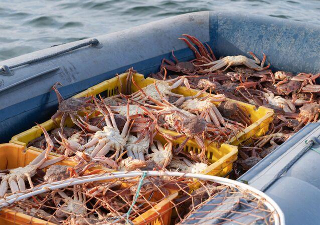 Wyrzucone na brzeg kraby. Katastrofa ekologiczna na Kamczatce