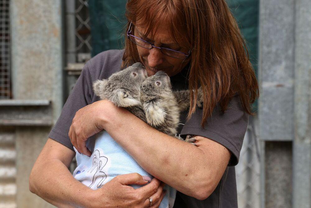 Wolontariuszka w koalami