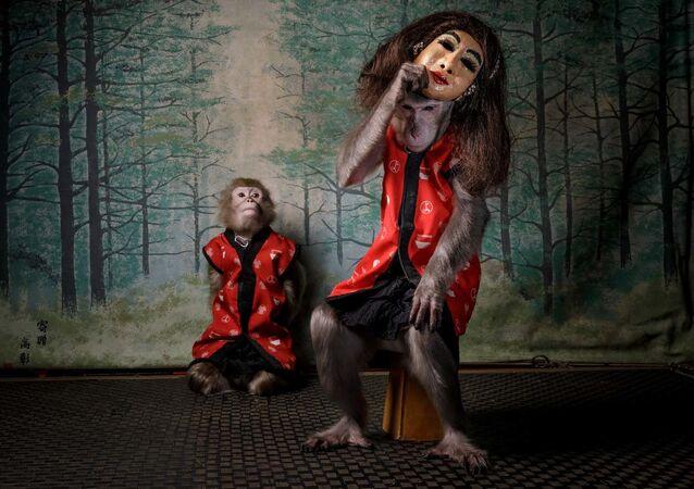 """Zdjęcie """"Des Affen Maske"""" autorstwa holenderskiego fotografa Jaspera Doesta, zwycięzcy konkursu European Wildlife Photographer of the Year 2020"""