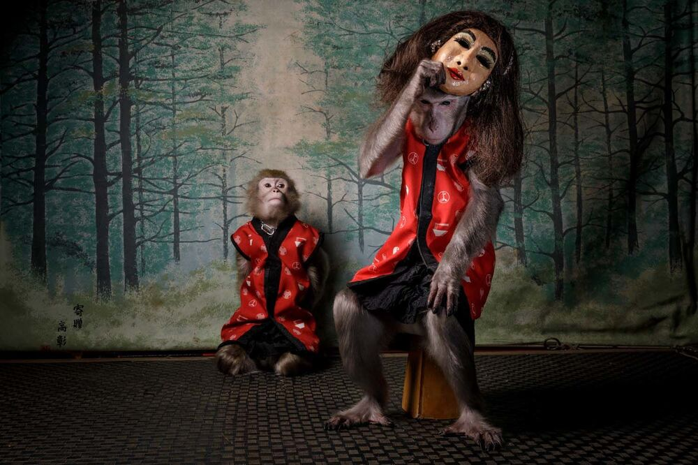 """Zdjęcie """"Des Affen Maske"""" autorstwa holenderskiego fotografa Jaspera Doesta, zwycięzcy konkursu European Wildlife Photographer of the Year 2020."""