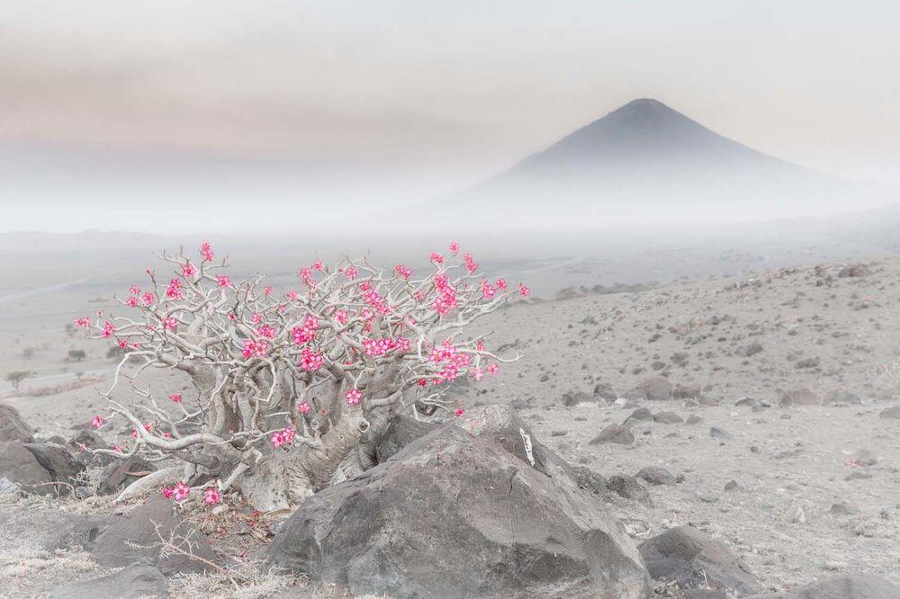 """Fotografia """"Blooming desert"""" włoskiego fotografa Marco Gaiottiego, zwycięzcy w kategorii Rośliny i grzyby w konkursie European Wildlife Photographer of the Year 2020."""
