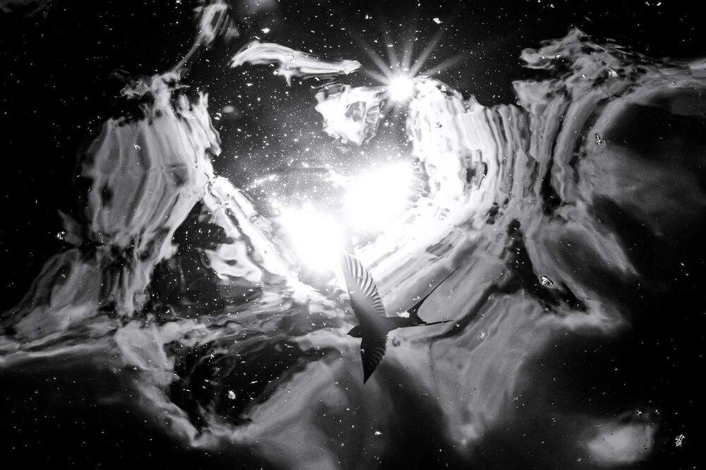 """Fotografia """"Galaxy"""" autorstwa niemieckiego fotografa Thomasa Hempelmanna, zwycięzcy w kategorii Nature's Studio konkursu European Wildlife Photographer of the Year 2020."""