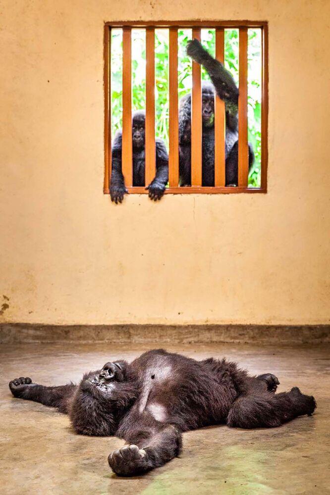 """Fotografia """"Empatia"""" zrobiona przez szwedzkiego fotografa Marcusa Westberga, zwycięzcę kategorii Człowiek i Przyroda w konkursie European Wildlife Photographer of the Year 2020."""