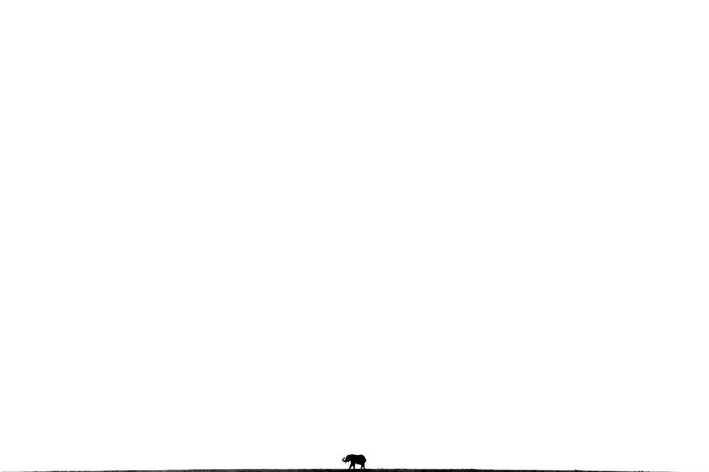 """Fotografia """"So big and yet so small"""" niemieckiego fotografa Christopha Kauli, zwycięzcy w kategorii Ssaki konkursu European Wildlife Photographer of the Year 2020."""