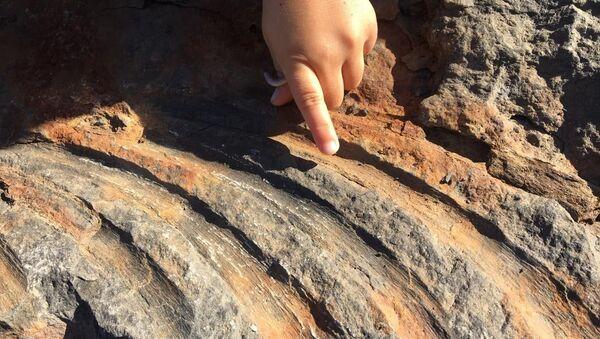 Szczątki ichtiozaura znalezione w skale na brzegu Wyspy Rosyjskiej - Sputnik Polska