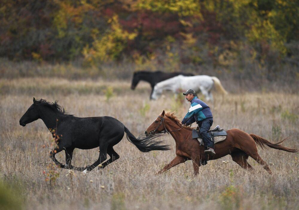 Konie na polu w pobliżu wsi Zilenogorskie, Krym