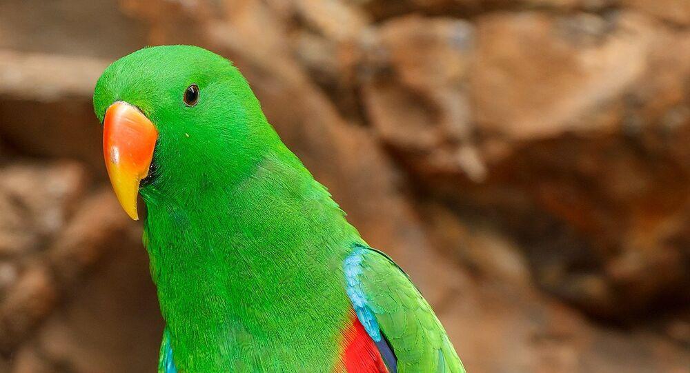 Papuga.