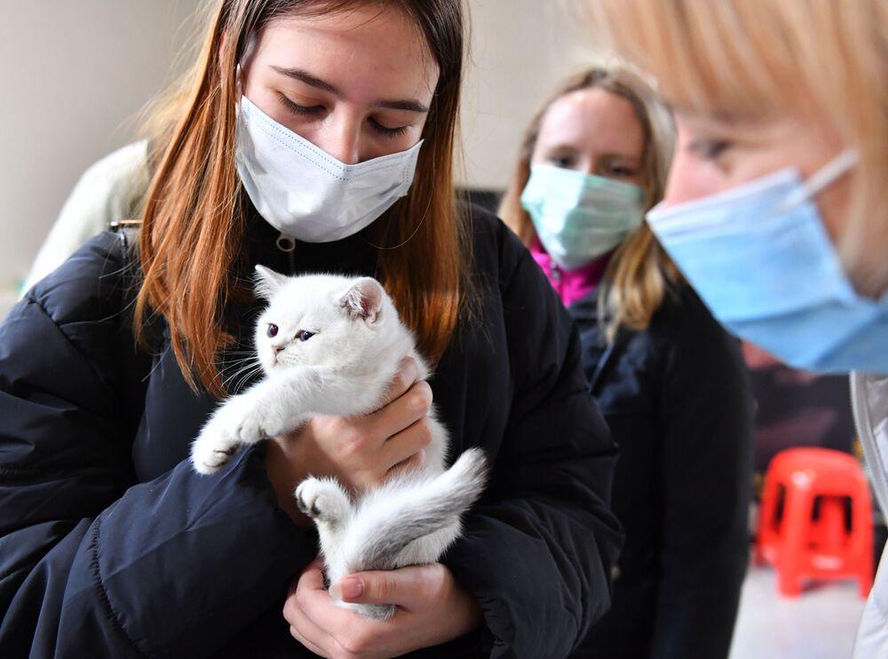 """Wystawa kotów """"Koszariki Show"""" w Moskwie"""