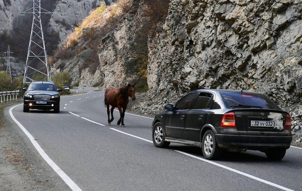Koń na drodze w Górskim Karabachu