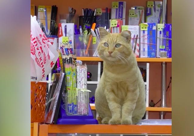 Kot menedżer