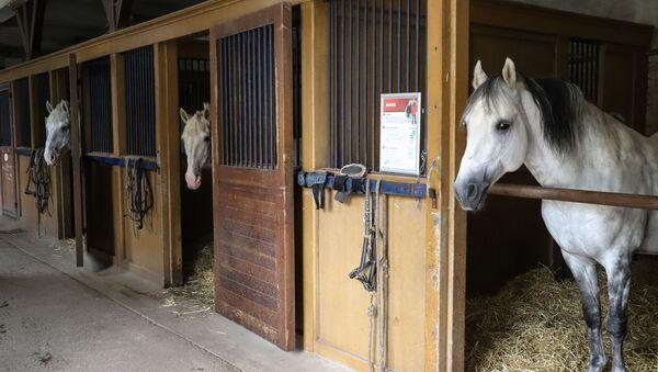 Konie w stajni Instytutu IFCE we Francji - Sputnik Polska