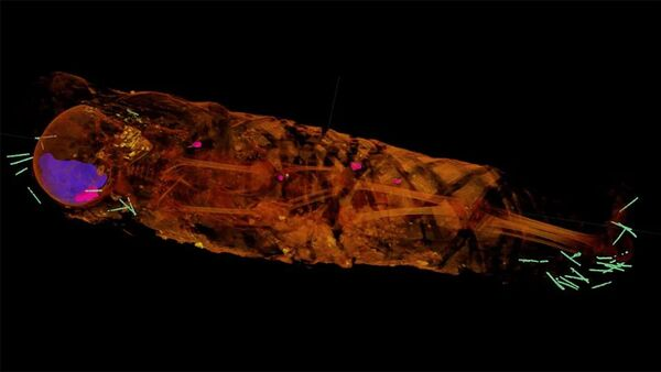 W mumii odkryto kilkadziesiąt małych przedmiotów - Sputnik Polska