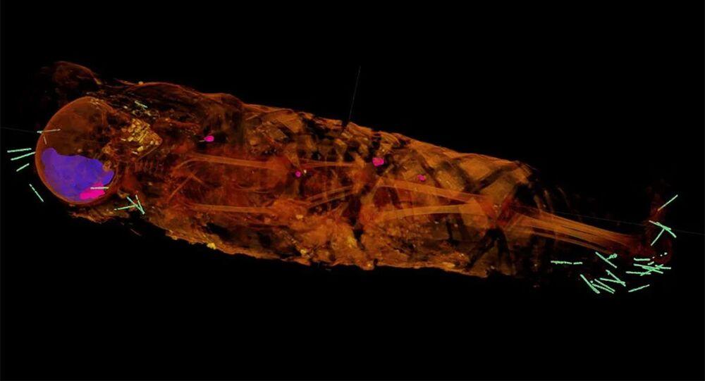 W mumii odkryto kilkadziesiąt małych przedmiotów
