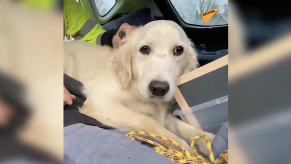 10 dni samotności: dron znalazł zaginionego psa - Sputnik Polska