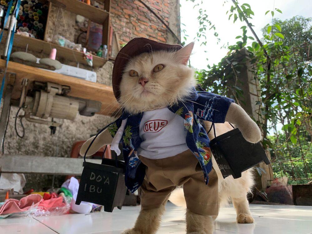 Kot w kostiumie cosplay