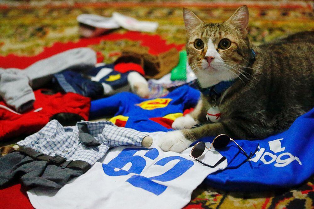 Kot wśród kostiumów cosplay w Dżakarcie w Indonezji