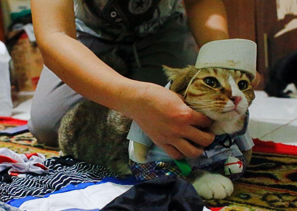 Kot ubrany w kostium Cosplay w Dżakarcie w Indonezji