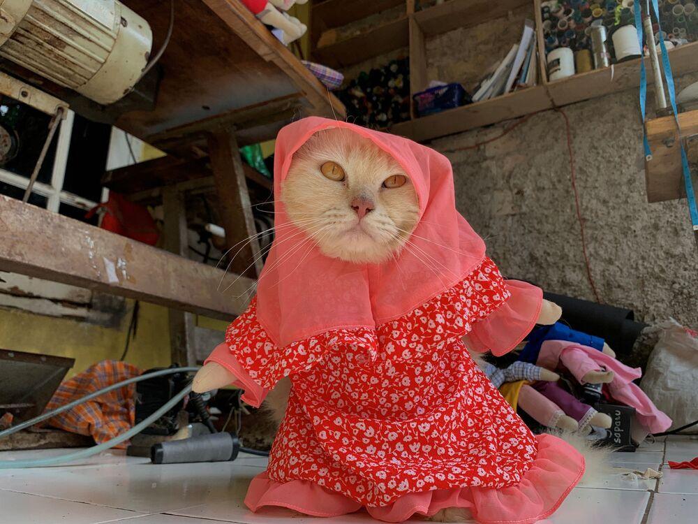 Kot nosi kostium hidżabu w Dżakarcie